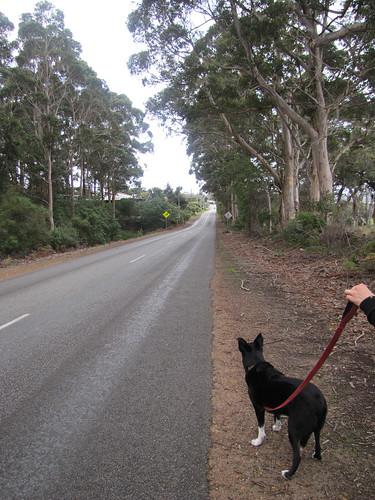 Heading Back On Lights Rd - Mt Hallowell Track, Denmark, Western Australia