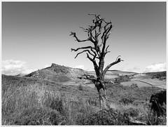 _DSC2397-Enhanced (alexcarnes) Tags: dead tree hen cloud leek staffordshire alex carnes alexcarnes nikon d850 sigma 28mm f14 art