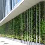 壁面緑化システムの写真