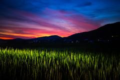 PhoTones Works #11904 (TAKUMA KIMURA) Tags: photones ricoh pentax k1mark2 takuma kimura 木村琢磨 木村 琢磨 風景 景色 自然 夕焼け 夕暮れ 日の入り 稲 田 山 シルエット 日本 岡山 landscape nature snap japan okayama rice field dusk twilight sunset