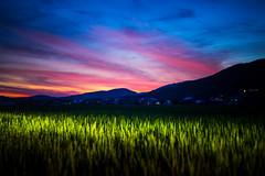 PhoTones Works #11902 (TAKUMA KIMURA) Tags: photones ricoh pentax k1mark2 takuma kimura 木村琢磨 木村 琢磨 風景 景色 自然 夕焼け 夕暮れ 日の入り 稲 田 山 シルエット 日本 岡山 landscape nature snap japan okayama rice field dusk twilight sunset