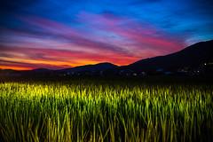 PhoTones Works #11901 (TAKUMA KIMURA) Tags: photones ricoh pentax k1mark2 takuma kimura 木村琢磨 木村 琢磨 風景 景色 自然 夕焼け 夕暮れ 日の入り 稲 田 山 シルエット 日本 岡山 landscape nature snap japan okayama rice field dusk twilight sunset