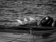 Criterios (Luicabe) Tags: agua airelibre animal ave barco cabello calle cuerda enazamorado exterior gaviota luicabe luis mar motor naturaleza ngc ola orilla paisaje yarat1 zamora zoom