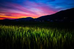 PhoTones Works #11905 (TAKUMA KIMURA) Tags: photones ricoh pentax k1mark2 takuma kimura 木村琢磨 木村 琢磨 風景 景色 自然 夕焼け 夕暮れ 日の入り 稲 田 山 シルエット 日本 岡山 landscape nature snap japan okayama rice field dusk twilight sunset