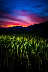 PhoTones Works #11903 (TAKUMA KIMURA) Tags: photones ricoh pentax k1mark2 takuma kimura 木村琢磨 木村 琢磨 風景 景色 自然 夕焼け 夕暮れ 日の入り 稲 田 山 シルエット 日本 岡山 landscape nature snap japan okayama rice field dusk twilight sunset