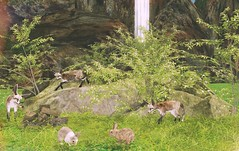 Enjoy the silence (Rose Sternberg) Tags: second life deco decor home garden interior landscape august 2019 tm creation flowers nature scene place rock trunk bushes wild grass plant wood pile rabbit fences fox