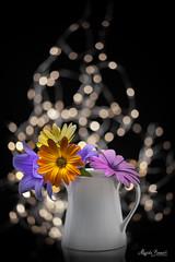 Bouquet (Magda Banach) Tags: nikond850 blackbackground bouquet colors flora flower lights lilac macro nature orange plants porcelain reflection yellow