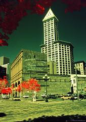 Kodak Infrared - Smith Tower - Washington State (Electric Crayon) Tags: smithtower pioneersquare pacificnorthwest washingtonstate seattle kingcounty usa unitedstates america kodak ektachrome 35mm infrared slidefilm 35mmscan filmgrain primefilmxa minolta xe7 1980s electriccrayon patrickmcmanus