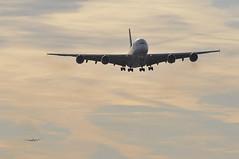 [07:42] ..the 27R approach (A380spotter) Tags: approach landing arrival finals shortfinals airbus a380 800 msn0034 9vski singaporeairlines sia sq sq0306 sinlhr msn0199 a6aph fromabudhabitotheworld facetsofabudhabi landorassociates 2014 livery colours scheme الإتحاد etihad etihadairways etd ey ey89g ey0011 auhlhr a320 200 geuue toflytoserve emblem achievement crest coatofarms colors internationalconsolidatedairlinesgroupsa iag britishairwaysshuttle sht sht88p britishairways baw ba ba1427 bhdlhr runway27r 27r london heathrow egll lhr