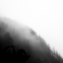 Vanishing Landscape 031 (noahbw) Tags: d5000 ecolastatepark nikon oregon pnw pacificnorthwest abstract coast coastline fog foggy forest hills landscape minimal minimalism mist misty natural noahbw rain rainforest sky spring square trees wet woods