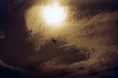 (Yutaka Seki) Tags: pentaxmesuper fujicolorc200 redscale homedeveloped unicolorpresskit argentixcac41powderkit pakonf135 airplane flying flight clouds sky sun backlit