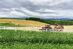 Harvest@Biei Hokkaido (Yang Yu's Album) Tags: japan kamikawa hokkaidō hokkaido harvest 北海道 日本 biei 美瑛 富良野 收割
