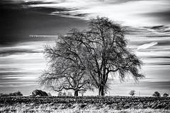Old Friends... (Ody on the mount) Tags: anlässe bäume em5ii fototour himmel landschaft mzuiko40150 omd olympus pflanzen schwäbischealb wolken bw blackandwhite clouds landscape monochrome sw savingtheclimatebytrees schwarzweis sky tree