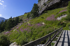 Vallée de Saas - Suisse (Alexis Rangaux) Tags: saasgrund saasfee suisse mountain flowers fantasticnature nature paysage landscape switzerland swiss montagne