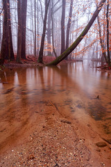 Ashore (Loizos81) Tags: fog mist autumn landscape waterscape stream river reflections trees forest