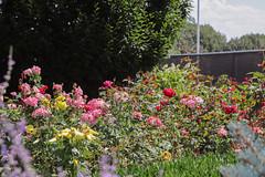 How's It Growin? at Sunken Gardens