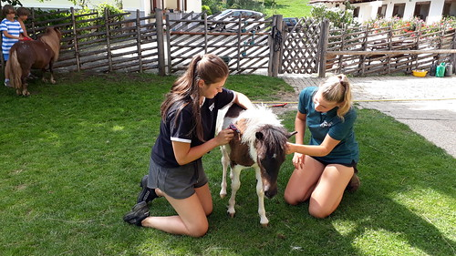 Ponymassage