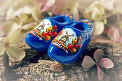 Little Dutch Shoes (Through Serena's Lens) Tags: smileonsaturday shoeshow dutch miniature hydrangeas driedflowers flower wood dof bokeh shoes macro blue clogs