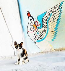 Happy Caturday from Crete (kirstiecat) Tags: crete streetart graffiti greece cat chat gato katze γάτα γάτοσ feline kitty caturday kitten