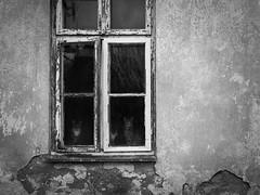 outside in (Neko! Neko! Neko!) Tags: blackandwhite blackwhite bw mono monochrome wall window home family cats emotion feeling outsidein