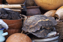 Shelter (k-os) Tags: ochre africa calabash shell turtle ghana medicin brown accra