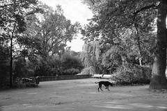 Dog (POStaes) Tags: amsterdam nikon nikonfe2 50mm ilford ilfordhp5 light travel travelling film analog photography blackandwhite blackwhite blancoynegro noiretblanc nb monochrome argentique
