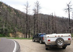 Burnt (zoniedude1) Tags: arizona wildfire burnt remnants deadsticks burntforest fryefire2017 destruction forestfire aftermath toastedterrain torched pinalenomountains 8800ftelevation mountgraham skyislands southeastaz coronadonationalforest outdoors exploration adventure skyislandexpedition2019 roadside hwy366 swifttrail bajatenttrailer teepeeiii southwest az nature canonpowershotg12 pspx19 zoniedude1