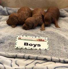 Mazie Boys pic 3 8-10
