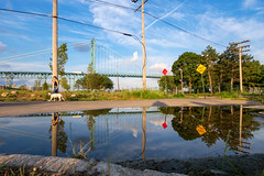 P8060574 (elsuperbob) Tags: detroit michigan riversidepark puddle reflections ambassadorbridge emptyspaces