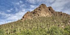 Ventana Canyon (Ray Chiarello) Tags: ventanacanyon tucson arizona mountain saguaros cactus desert landscape southwest sonya7iii sigmamc11 canonef1635mmf4lisusm