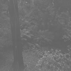 Backyard (Matthew Paul Argall) Tags: 120film 120 mediumformat blackandwhite blackandwhitefilm squareformat squarephoto ilforddelta100 100isofilm backyard