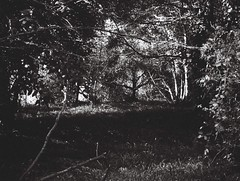 Nothing! (Matthew Paul Argall) Tags: jcpenneyelectronicstrobepocketcamera fixedfocus 110 110film subminiaturefilm lomographyfilm 100isofilm blackandwhite blackandwhitefilm
