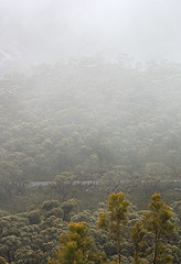 Uncertain landscape (simoneandginko) Tags: grampians victoria australia fog mist trees mountains haze forest