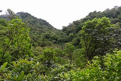 Costa Rica (joeksuey) Tags: costarica joeksuey bird curicancha wildlife reserve park insects bromeliads epiphytes flower chestnutheaded oropendola trail monteverde fungi millipede click beetle nest santaelena plants tree childrenseternalforest