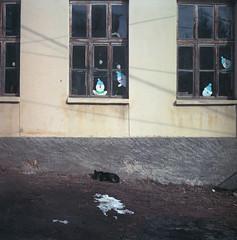 sleeping under the school's window (Vinzent M) Tags: brillant heliar 75 zniv voigtländer macedonia fyrom македонија kodak portra bitola monastir битола манастир bukovo буково dog