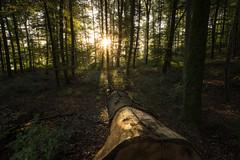 Forest (Sebo23) Tags: forest wald sonnenstrahlen sunrays sonnenstern sunstar licht light naturaufnahme natur landschaftsaufnahme landschaft canoneosr canon16354l