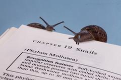Know Thyself (SkyeWeasel) Tags: macromondays printedword macro book snail mollusc invertebrate gastropod gardensnail cornuaspersum fieldguide