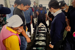 Enchère au marché aux poissons à Umino (8pl) Tags: umino japon okinawa poisson enchères marché gens acheteurs vente maritime bacs sol désignation
