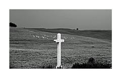 Aubrac (Yvan LEMEUR) Tags: aubrac aveyron croix immensité solitude pastoralisme extérieur ambiance nature noiretblanc nb bw blackandwhite france landscape paysage