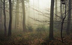 Shadowdancers (Netsrak) Tags: baum bäume eu eifel europa europe forst landschaft natur nebel rheinland rhineland wald fog forest landscape mist nature outdoor trees winter woods
