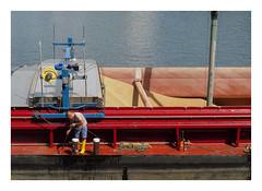 At Beck's river dock (AurelioZen) Tags: europe germany freiehansestadtbremen bremen weserquay beckbrewery worker amdeich barley beerproduction