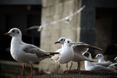 108-DSC_1074be (Lubaya.cm) Tags: reisen birds lisbon klosterruine ruine