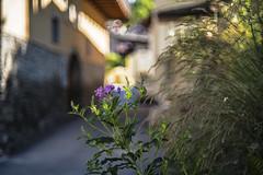 helios 44-4 #7 ( on Explore ) (Roberto Defilippi) Tags: 2019 292019 rodeos robertodefilippi bokeh helios44 fiore flowers