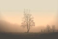 ** (Hulalulatallulahoop74) Tags: mist fog tree namu rivington lancashire beauty
