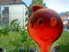 Morning coffee (Jean-Luc Léopoldi) Tags: humour fenêtre immeuble plastic spoon cuiller smile sourire smiley orange basil basilic chives ciboulette balcons sale dirty café