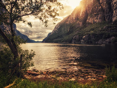 under the tree (bjorns_photography) Tags: landscape nature ocean water mountain sunlight sun tree clouds boat