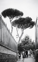 Trees (8230This&That) Tags: europe italy mediteranean rome ancientruins art culture history ruins street streetpeople trees roma streetphotography streetscene peoplewatching lazio