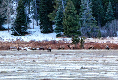 Fall River Rd, Estes Park, Rocky Mountain National Park (aud.watson) Tags: america northamerica us usa colorado rockymountainnationalpark fallriverroad mountain valley lake glacialvalley winter snow ice sunrise dawn muledeer