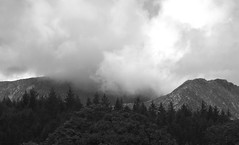 Arran's shrouded peaks (Dave Russell (1.5 million views thanks)) Tags: brodick isle island arran clyde west western scotland ecosse hills peak peaks shrouded covered low cloud weather tree trees bw black white mono monochrome blackandwhite outdoor wandering nature photo photograph photography canon eos eos7d 7d