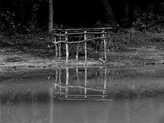 Reflection in the pond. (ALEKSANDR RYBAK) Tags: изображения отражение пруд монохромный вода поверхность берег природа растения дерево images reflection pond monochrome water surface coast nature plants tree